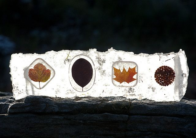 Berries & Leaves Ice Sun Window