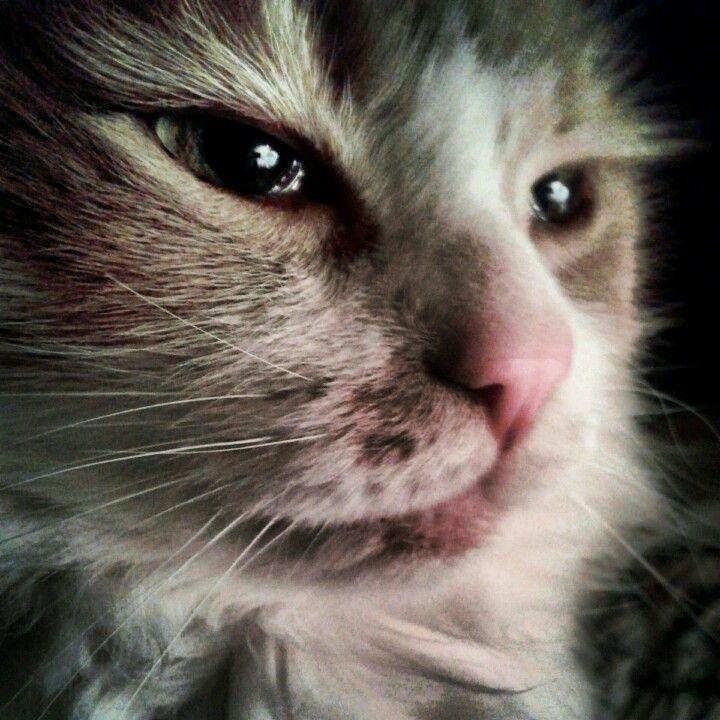 Simpkin is thinkin'!