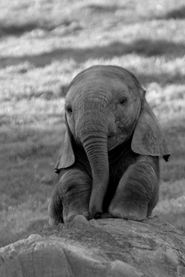 Baby Elephant Iphone Wallpaper 640x960px | Wallpapers | Animals, Cute animals, Elephant