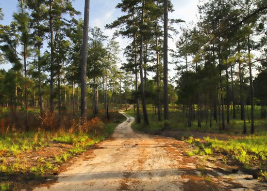 """Road going out to the """"back acres"""" of Pebble Hill Plantation."""