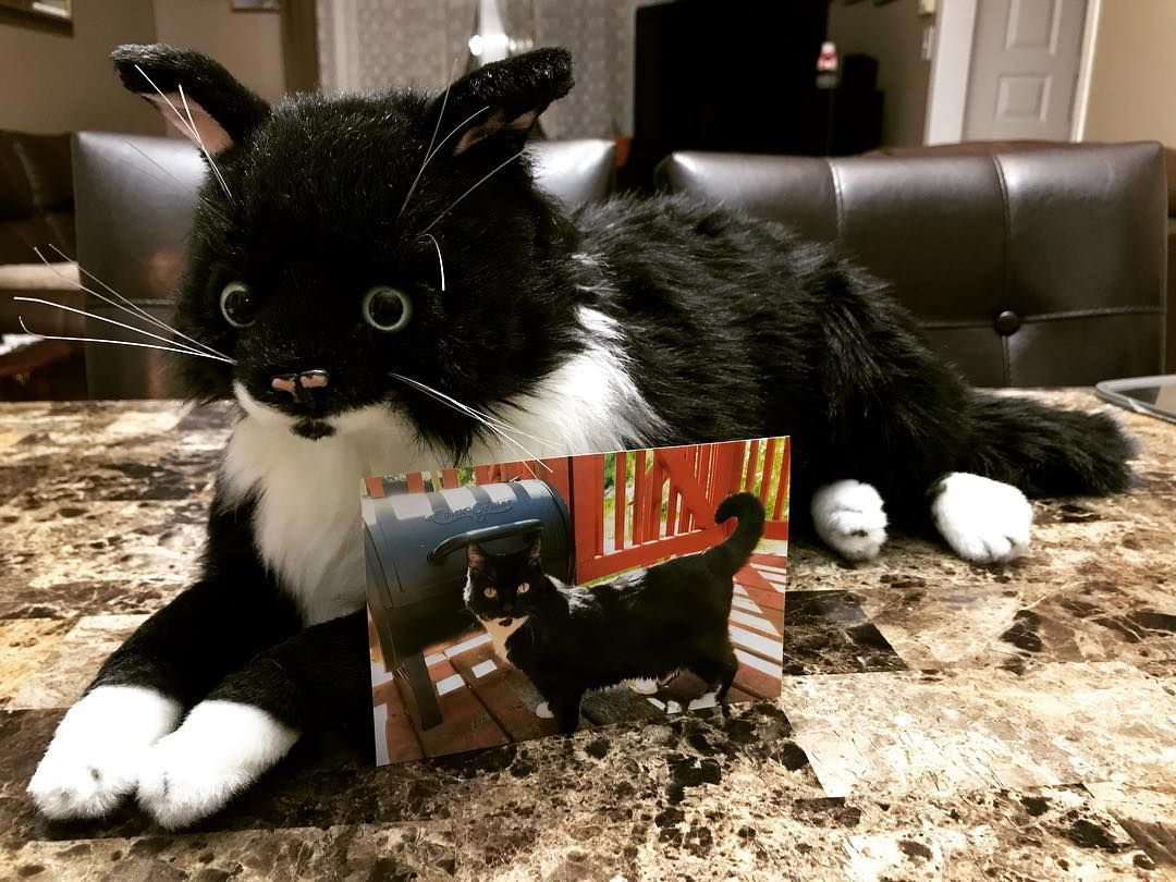Stuffed Animal of Your Pet, Pet Pillows, Pet Products