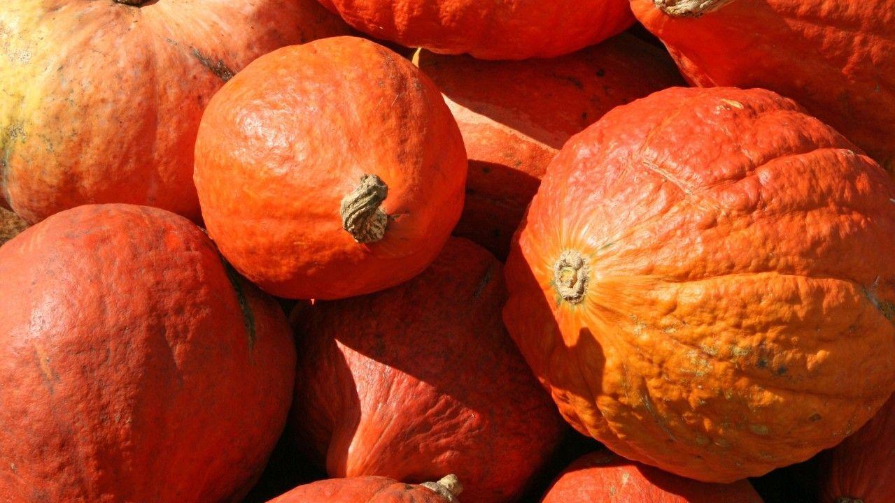 يعتبر اليقطين مصدر ا رائع ا للبوتاسيوم وبيتا كاروتين والذي يتحول إلى فيتامين أ كما أنه يحتوي على بعض المعادن بما في ذلك الكالسيوم والمغنيس Vegetables Pumpkin