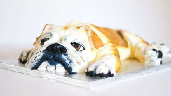 introducing cake dogs the tasty new treat dog cakes dogs dog trends pinterest