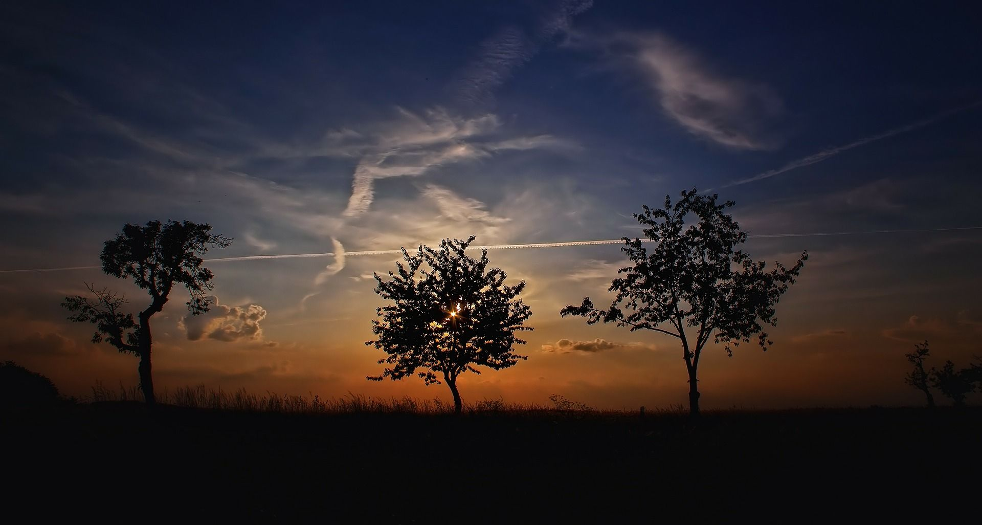 Trees under beautiful skies in the sunset