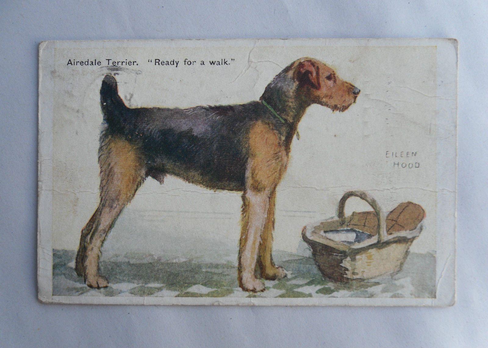 1925 Colour Postcard Airedale Terrier Ready For A Walk Eileen