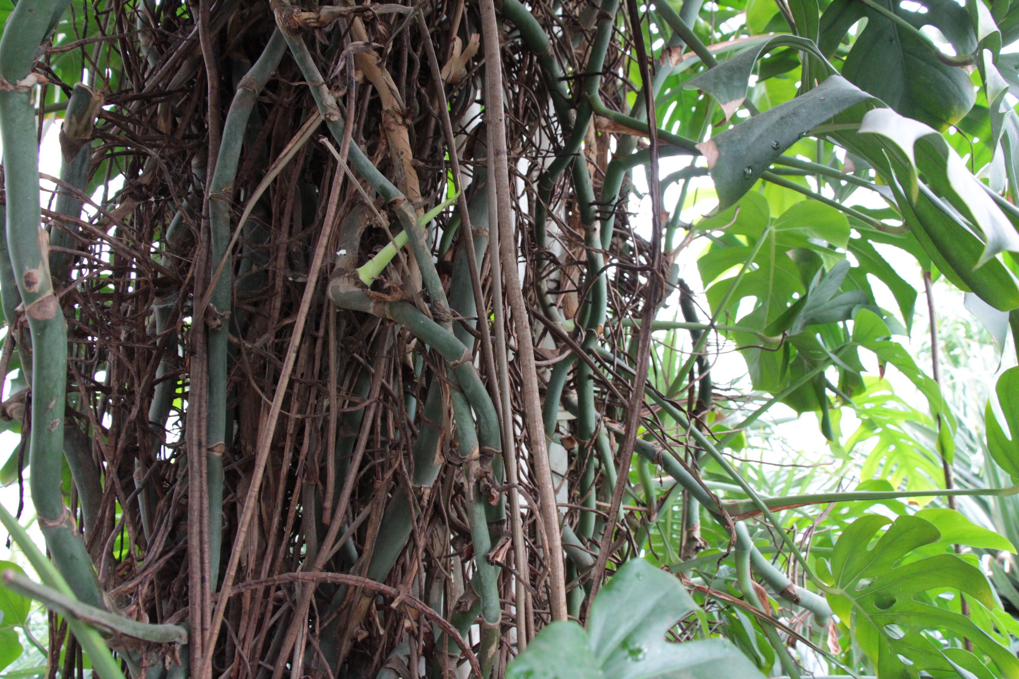 169 Anisa Khan Garden Photography Plant Leaves Kew Gardens
