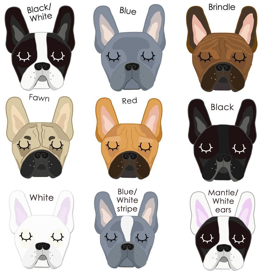 Frenchie Copper Printed Personalised Dog Christmas Decoration For French Bulldogs Star Or Bauble French Bulldog Puppies French Bulldog Dog Bulldog Puppies
