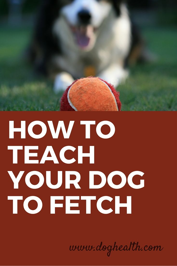 Do You Have A Dog That Doesn T Know How To Play Fetch Doesn T