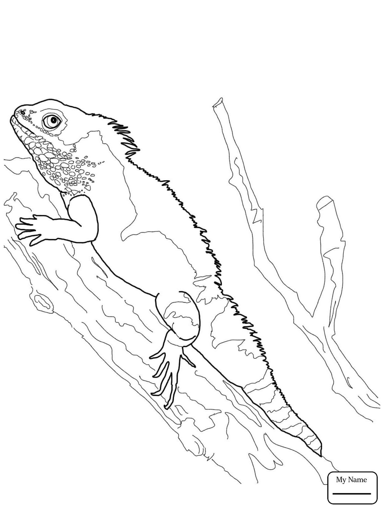 Bearded Dragon Coloring Page Youngandtae Com Dragon Coloring Page Bearded Dragon Colors Bearded Dragon