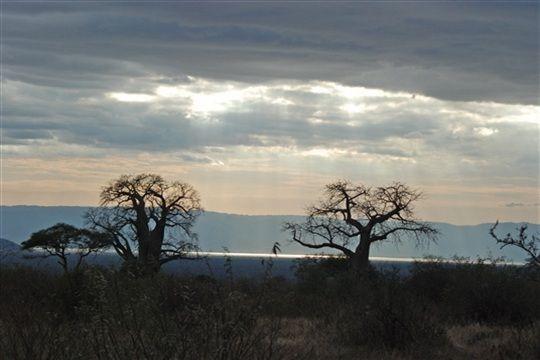 Laissez-vous tenter par un safari dans la réserve de Selous, sanctuaire aux végétations variées et à l'écart de l'activité humaine, permettant à de nombreux animaux de prospérer tels que : les rhinocéros noirs et les guépards.