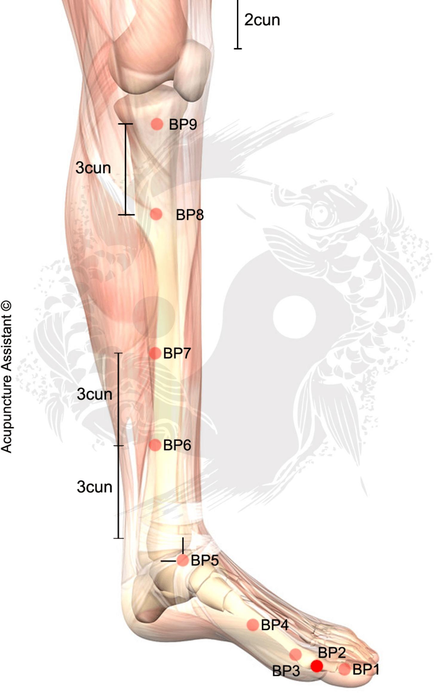 Localização do Ponto: Entre o corpo e a base da falange proximal do ...