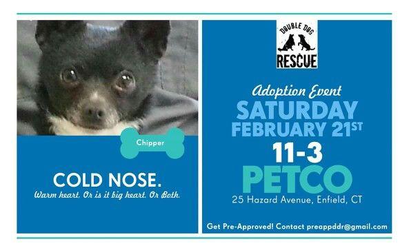 Adoption Event Dog Park Petco Dog House