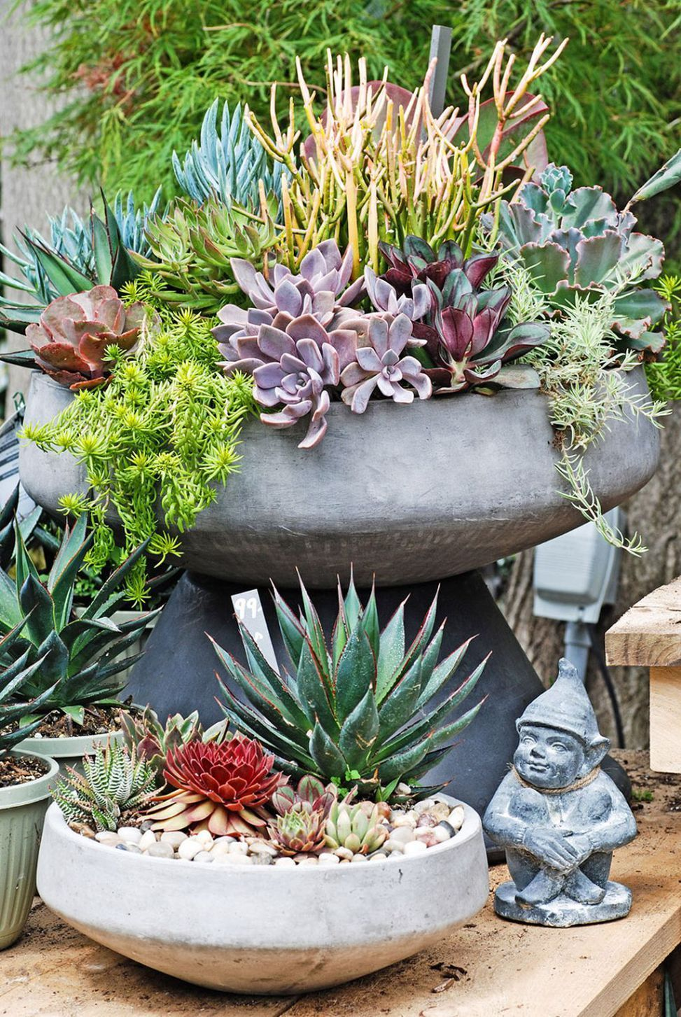 Start A Succulent Container Garden Potted Succulents Are Perfect Summer Plants For Midwest Porch Patio Or Deck Thanks To Their Small Size Water Saving