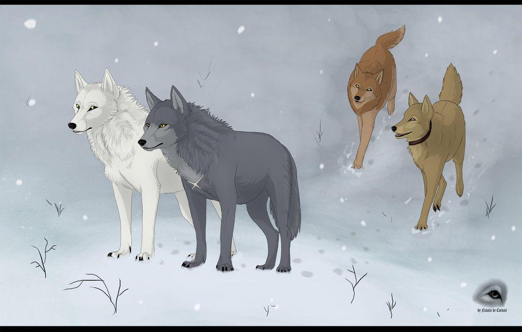 wolf's rain toboe and tsume - Hige Giba