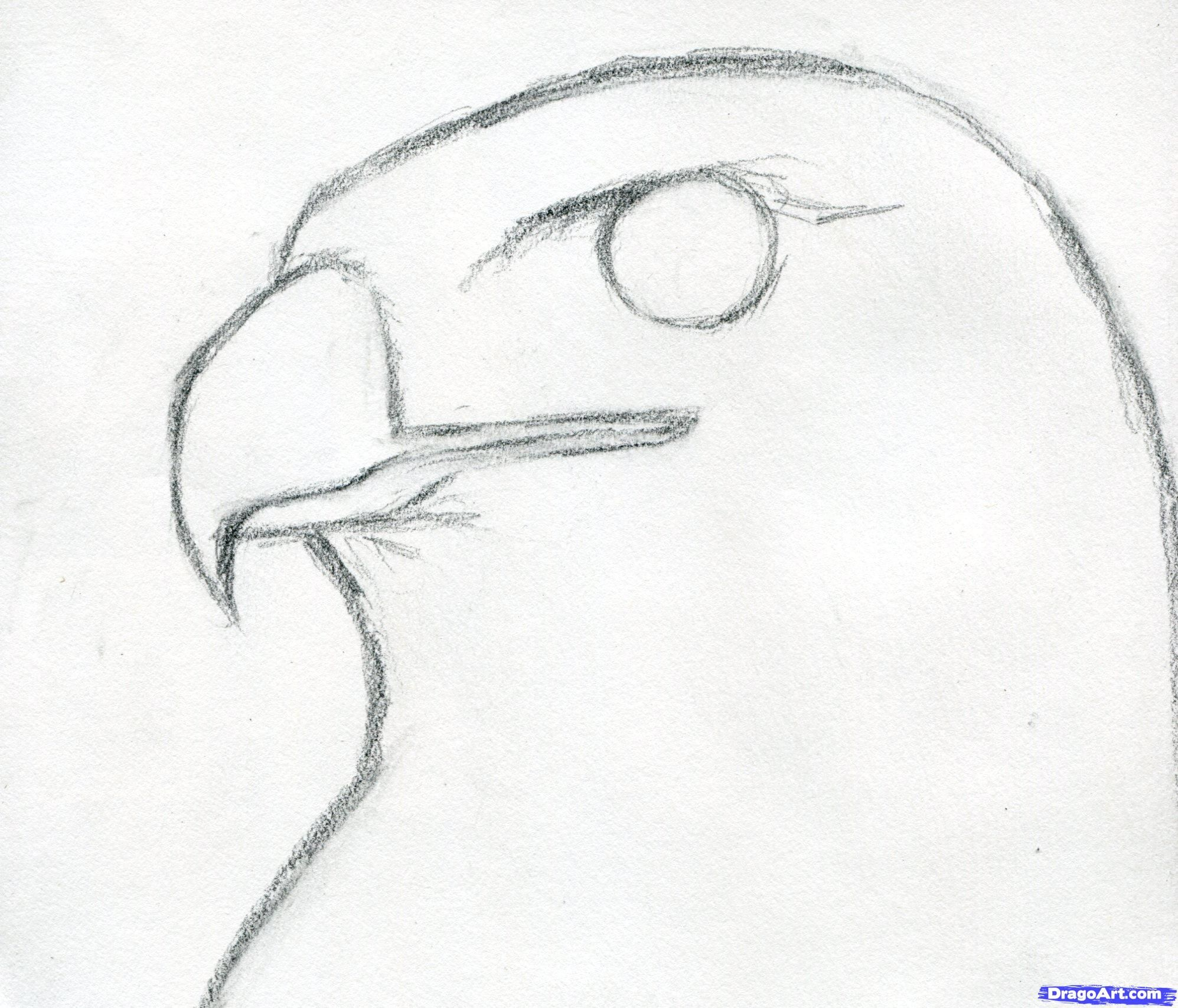 how to draw a hawk red tailed hawk step by step birds