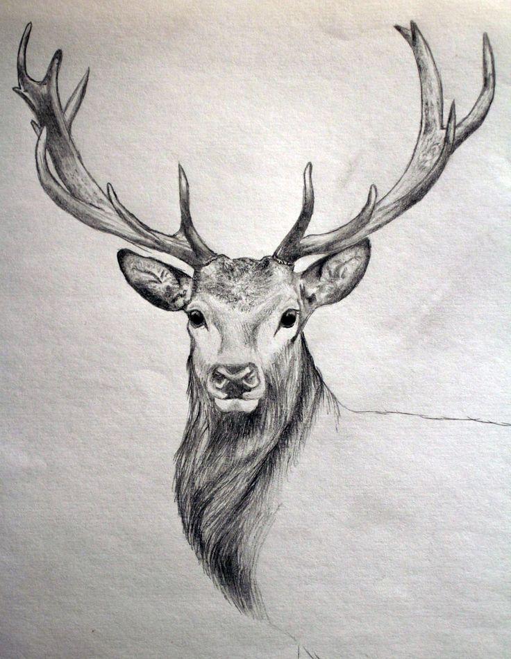 Zeichnen Nach Der Jagd Zeichnen Animal Sketches Deer Drawing Realistic Drawings