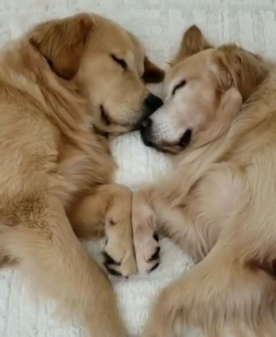 Pin on Puppy Love