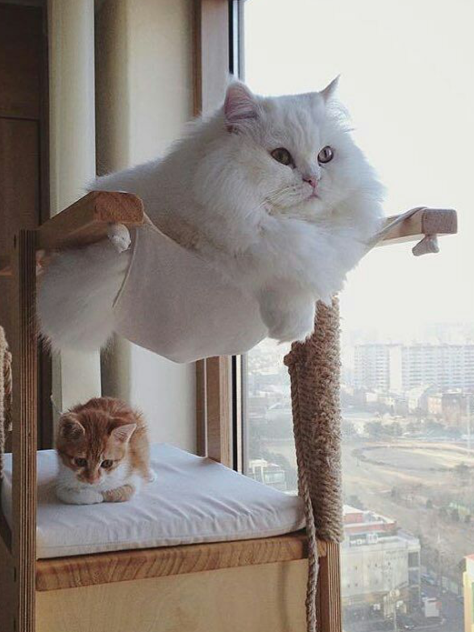 """Kitten """"Uh, I should have picked the top bunk""""! 