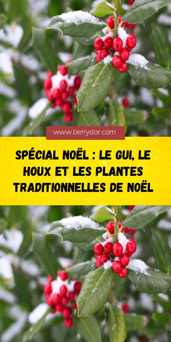 Special Noel Le Gui Le Houx Et Les Plantes Traditionnelles De Noel Plante Le Gui Plante De Noel