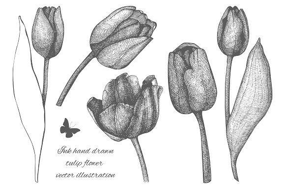 Ink Hand Drawn Tulip Flower Sketch By Yevheniia On Creativemarket Flower Sketches Tulips Flowers Flower Illustration