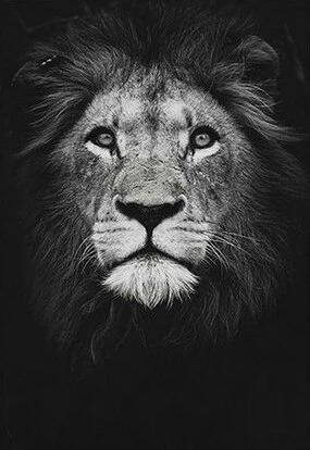 Affiche Lion Noir Et Blanc Lion Noir Et Blanc Lion Noir Paysage Noir Et Blanc