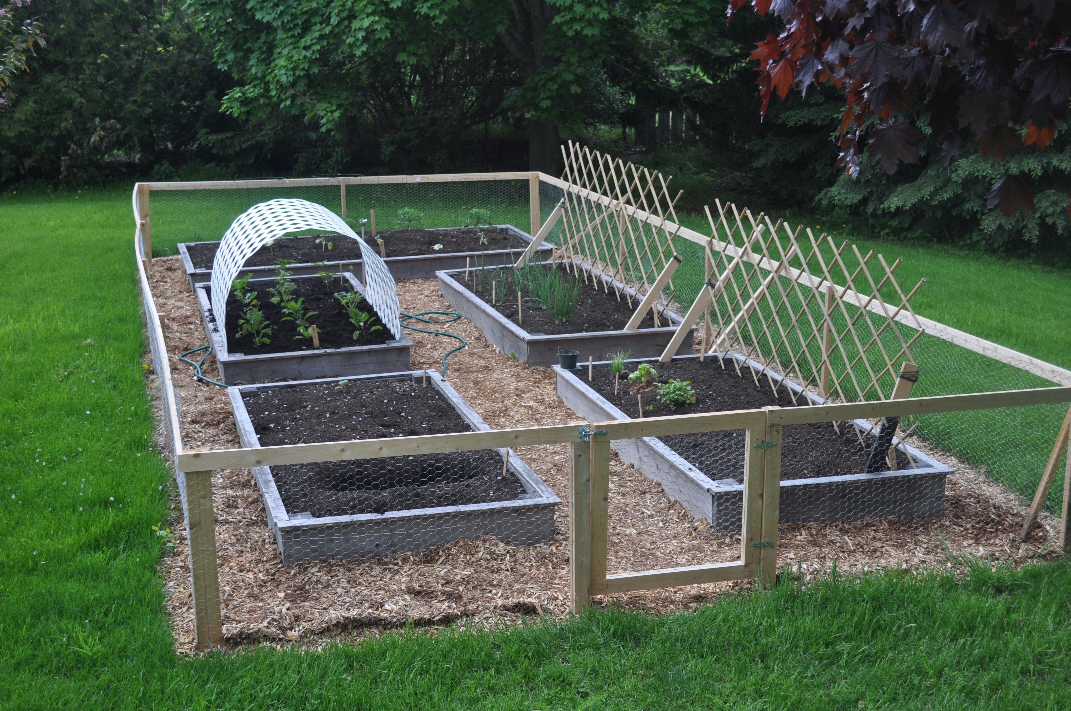 Easy backyard garden with raised beds build from reclaimed cedar ...