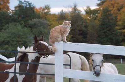 2 Cat Pile Daily Kos New Users Guide To Dkos By The Pony Express Pony Express Pony Expressions От 6 до 38 мм. 2 cat pile daily kos new users guide
