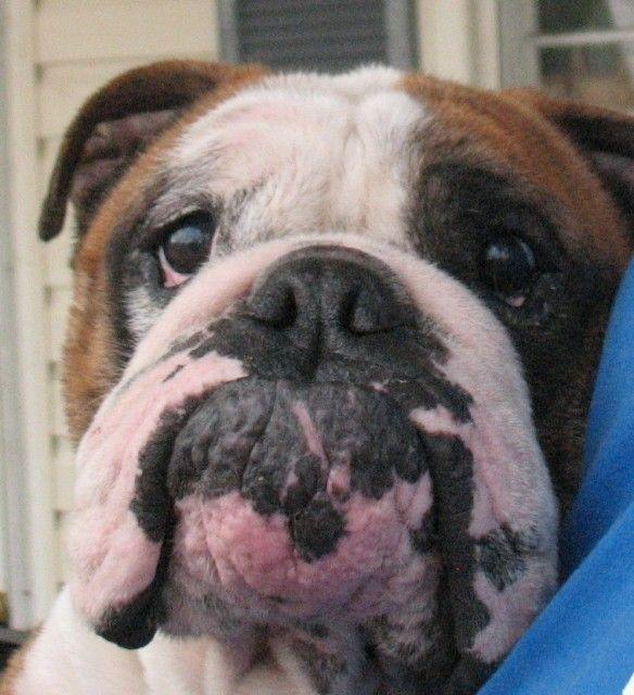 Adopt Cinderella On We Want A Dog Dogs Cinderella Adoption