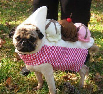 Banana Split Corgi How Sweet Puppy Halloween Costumes Pet