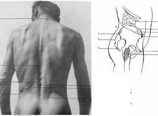 torso area