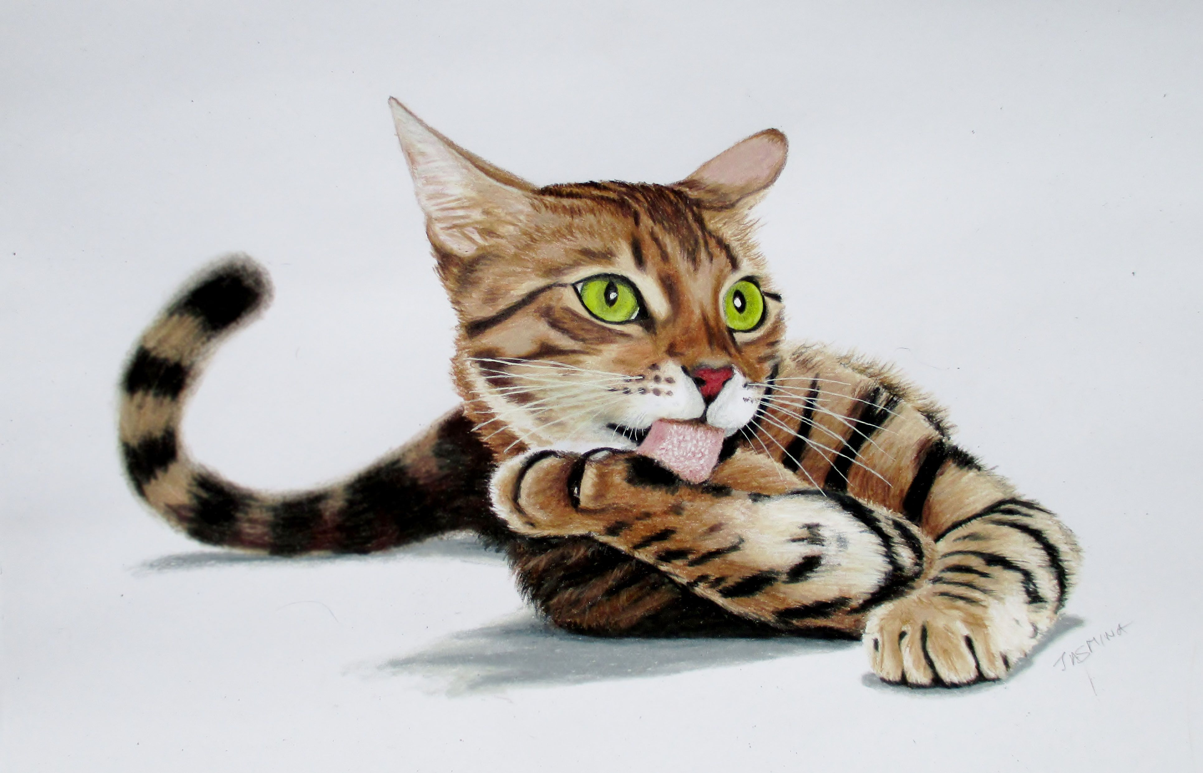 Bengal cat drawing with colored pencils