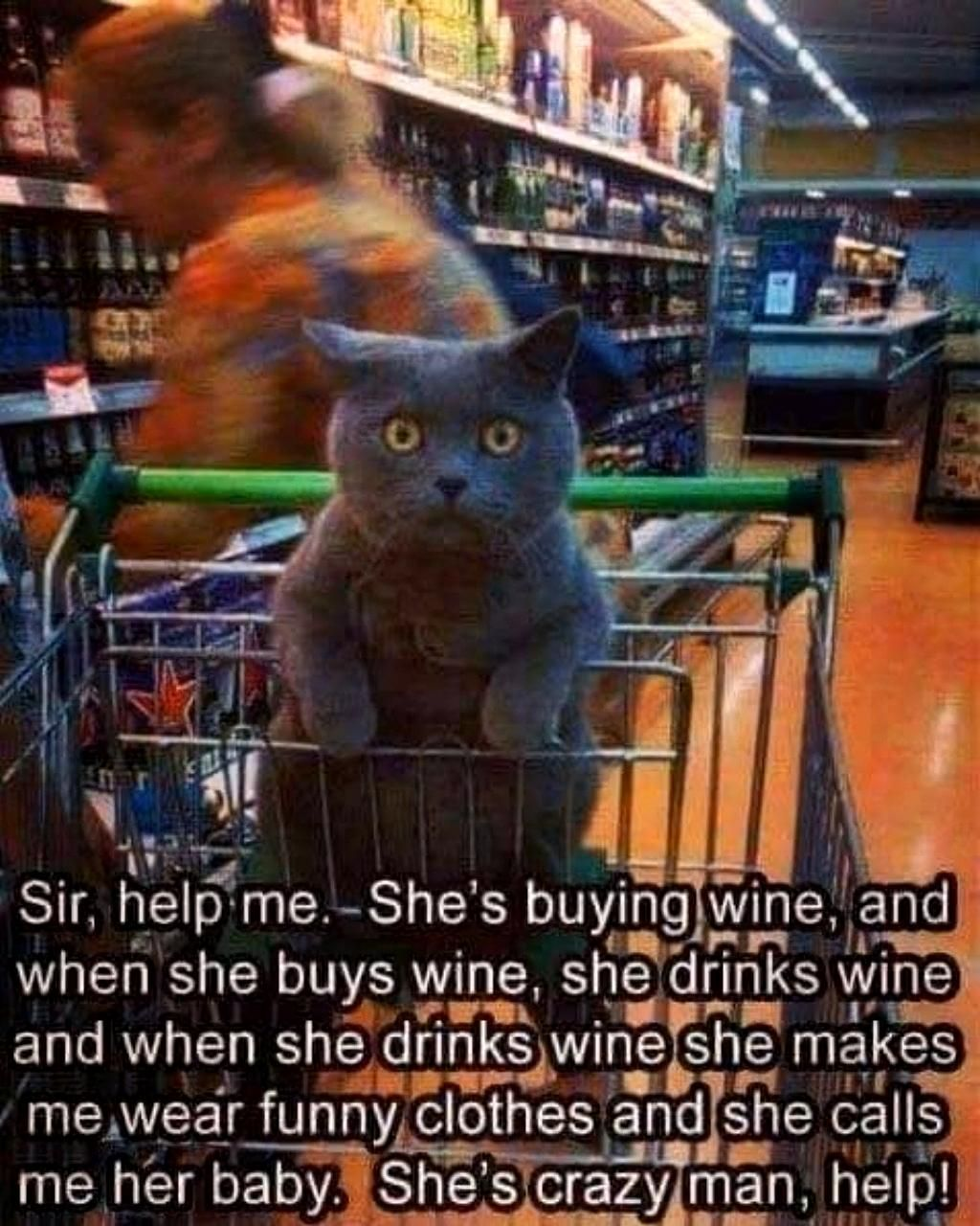 Photo of Cat Hair Don't Care Cat T Shirt, Cat Humor Funny Cat Shirt, Crazy Cat Lady, Cat Meme, Cat Video