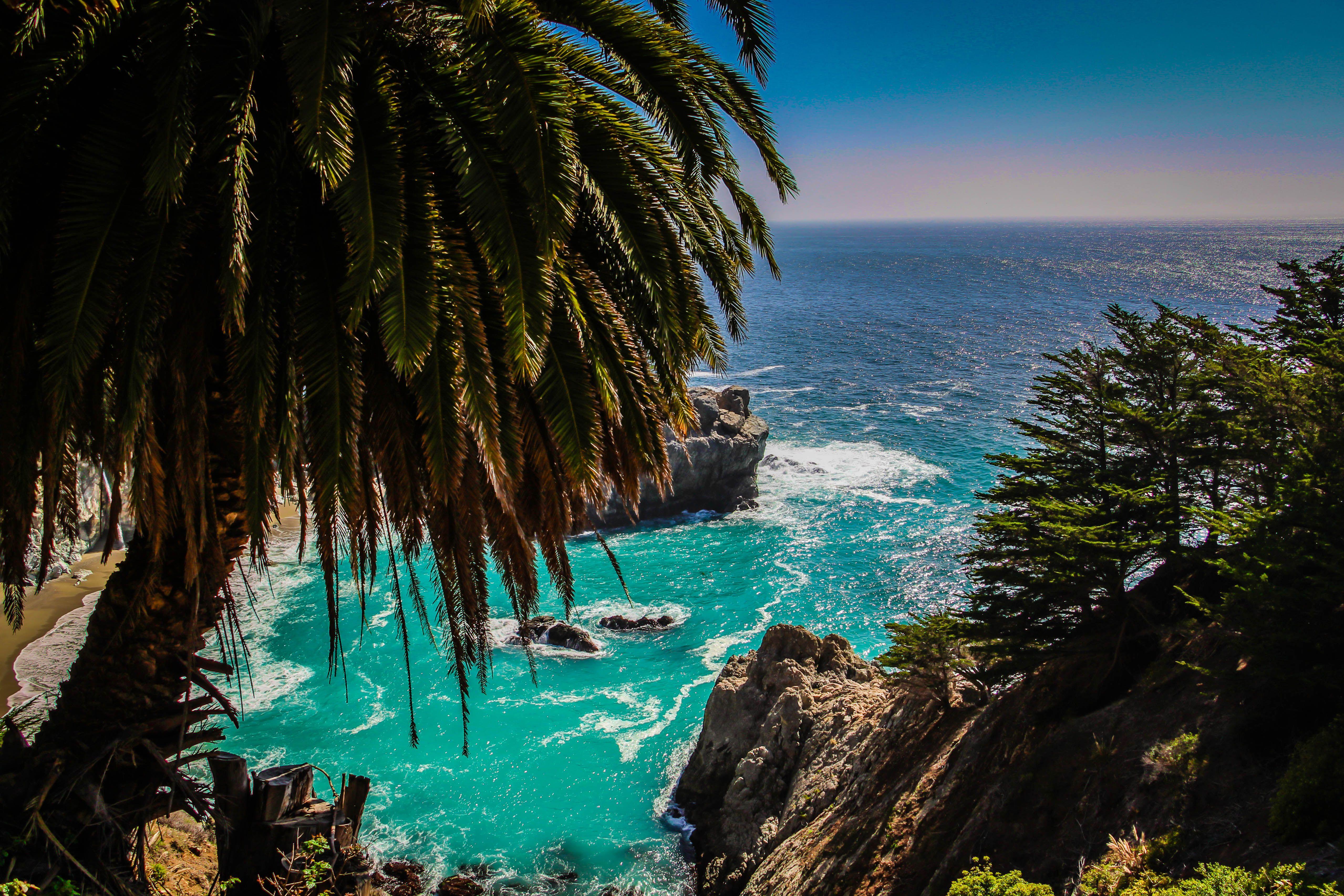 Pacific Ocean Big Sur California Beach 4k Hd Desktop: Palm Tree Over McWay Cove In Big Sur, CA