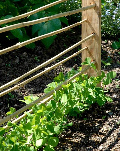 Pin On Gardening Homesteading