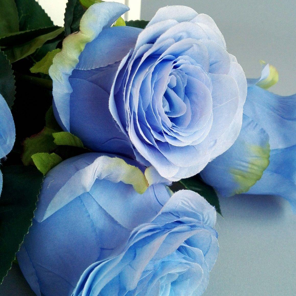 Blekitna Roza Swiateczne Atelier Rose Flowers Plants