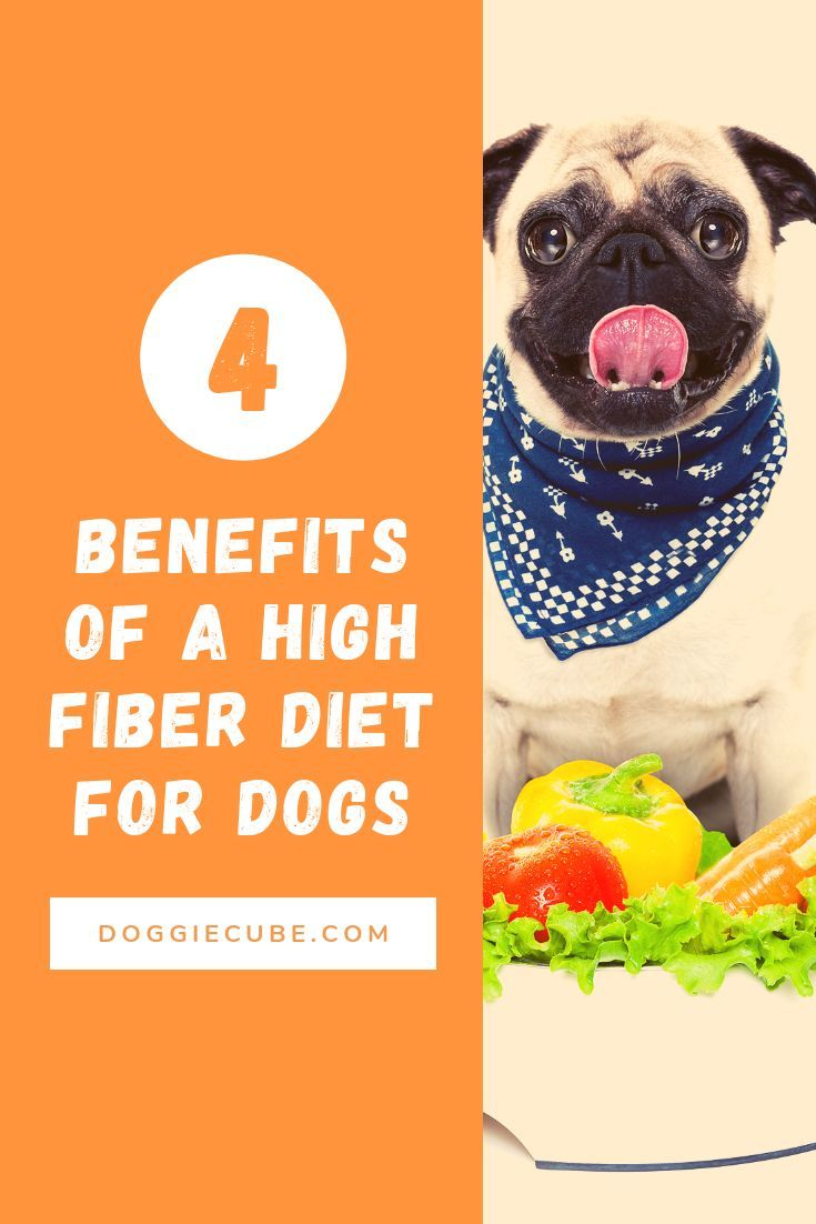 4 benefits of a high fiber diet for dogs doggie cube in