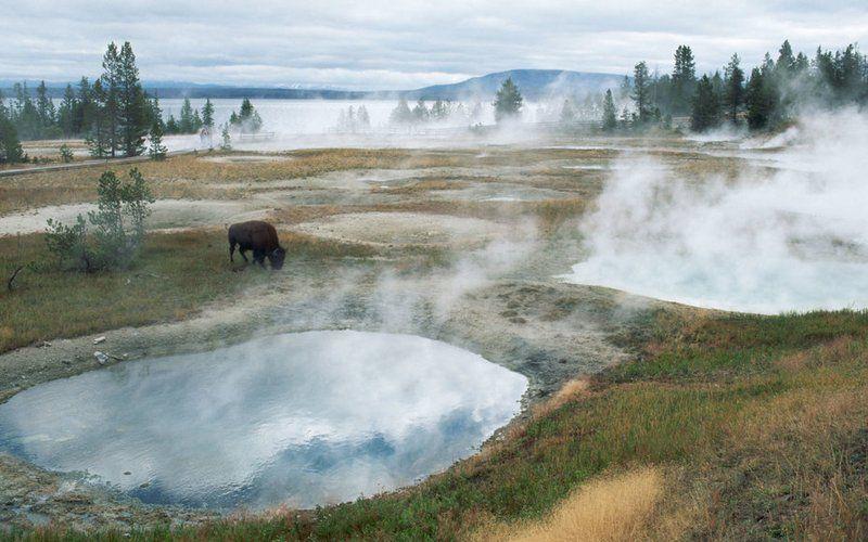 The Best National Parks for Wildlife Spotting | Travel | Smithsonian