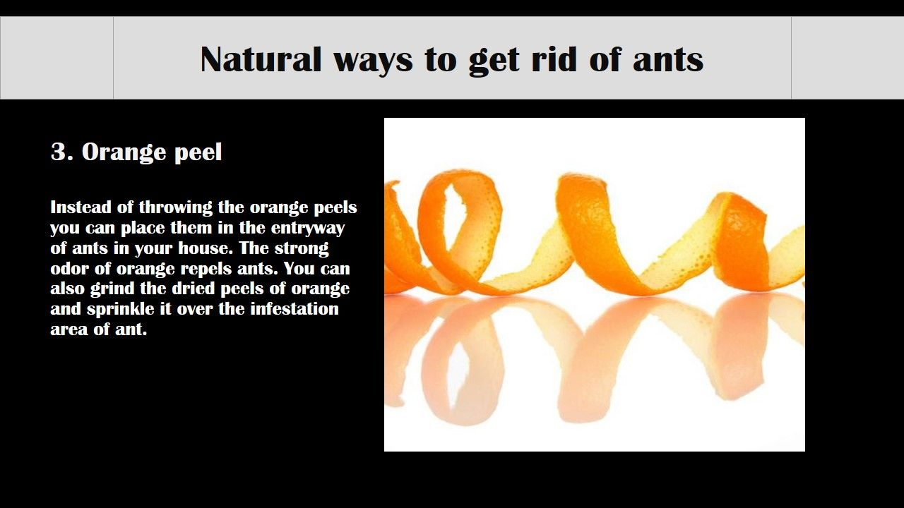20 effective natural ways to get rid of ants in home