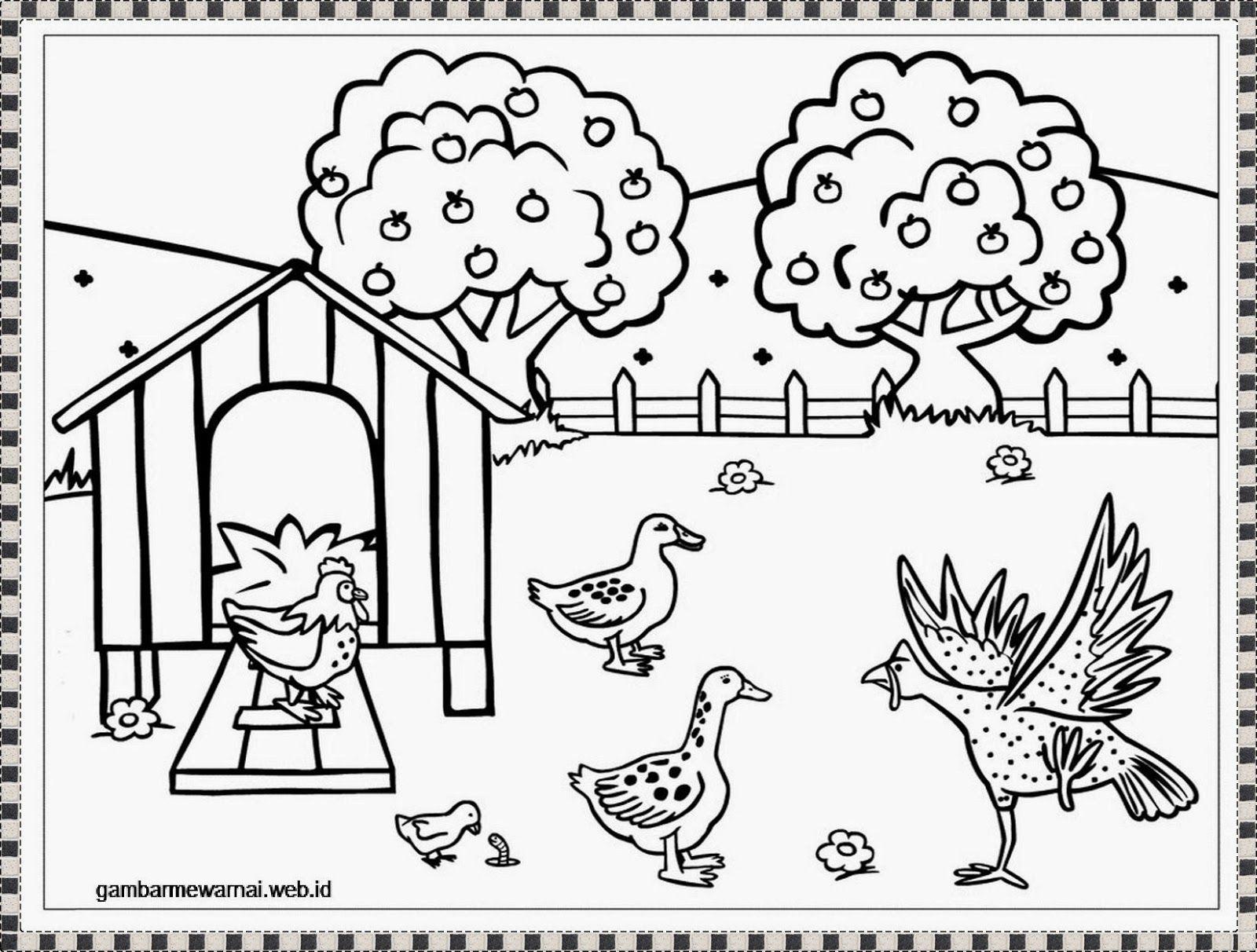 gambar mewarnai ayam