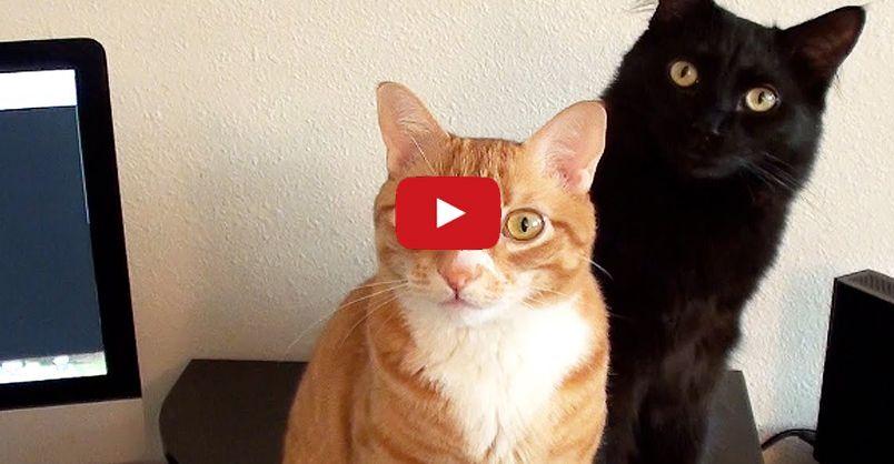 Scientists Create Cat Music!