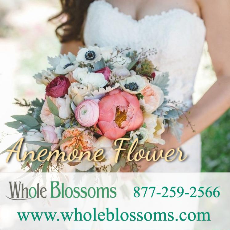 Anemone Flower In 2020 Wholesale Flowers Wedding Wholesale Flowers Online Bulk Flowers Online