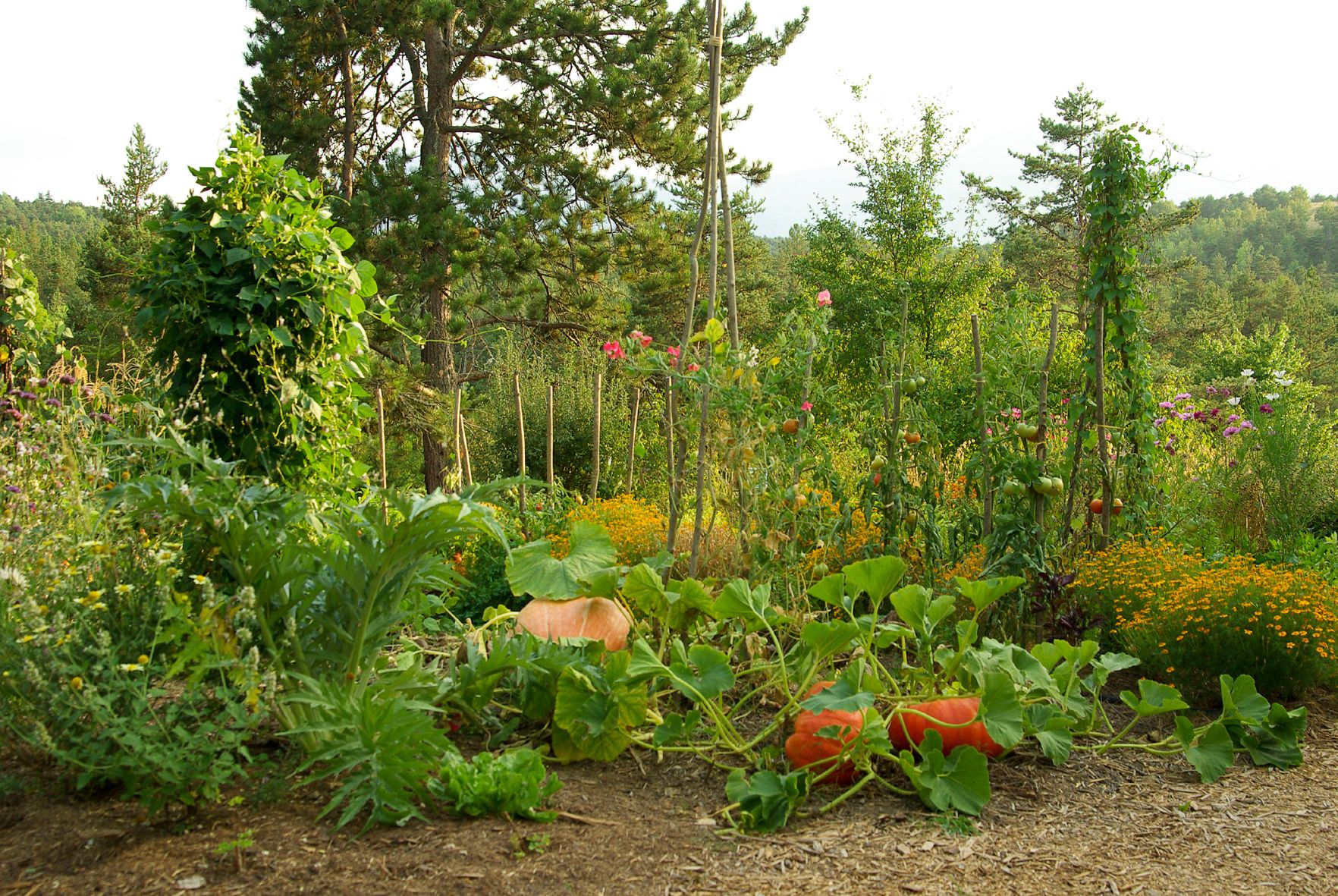 Potager Jardinage Pinterest