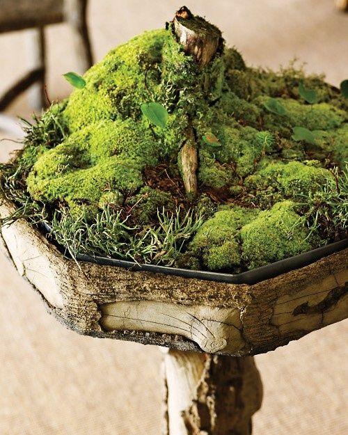 An Absolutely Cute Moss Garden Growing In A Birdbath, Fit