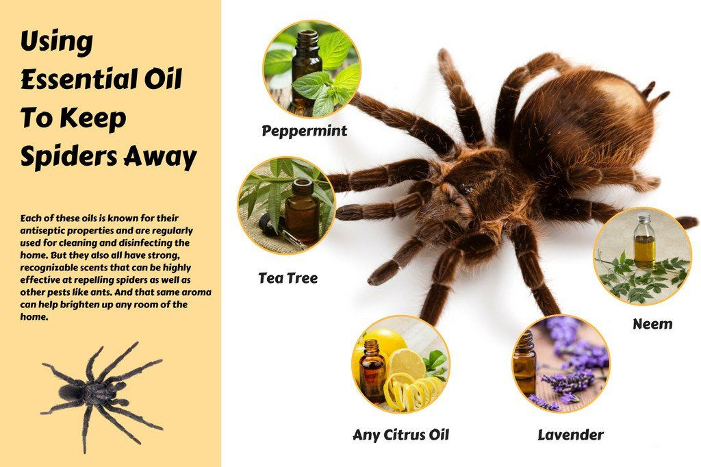 Do Essential Oils Keep Spiders Away Homemade Health Keep