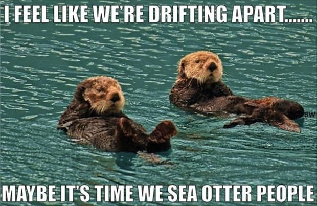 funny puns, one liner jokes | For the Love of Furballs | Sea