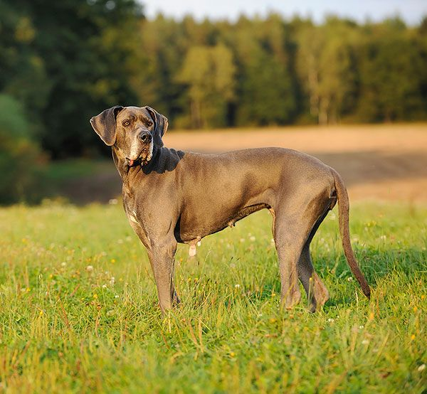 How To Spot And Prevent Hip Dysplasia In Dogs Canine