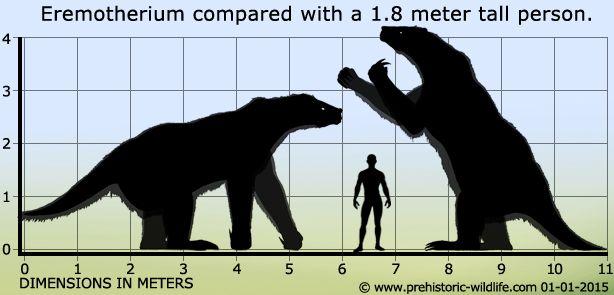 Eremotherium #prehistoriccreatures