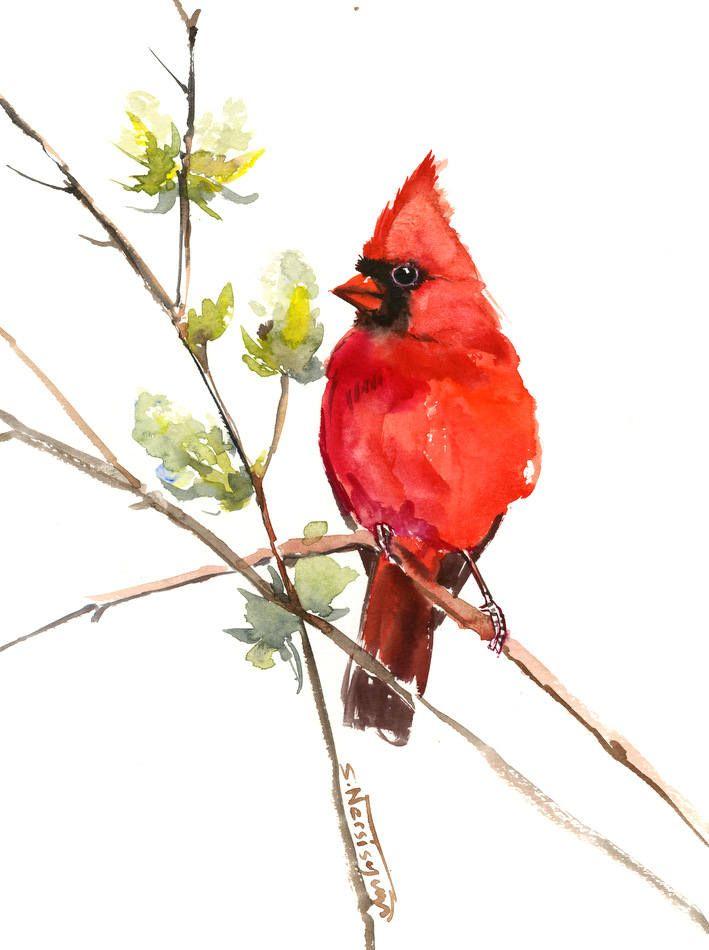 Cardinal Bird Artwork Red Bird Art Original Watercolor Painting 9