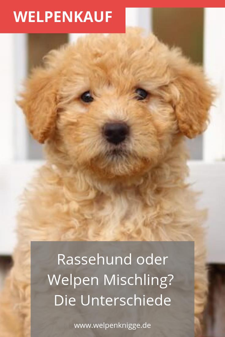 Solltest Du Einen Welpen Mischling Kaufen Oder Lieber Einen Rassehund Welpen Mischlinge Welpen Reinrassige Hunde