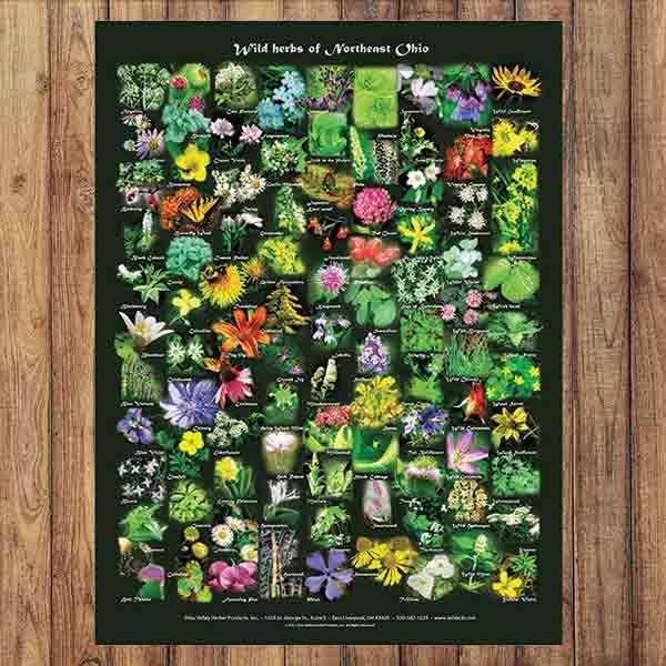 Wild Herbs of Northeast Ohio Poster | Ohio posters, Wild ...